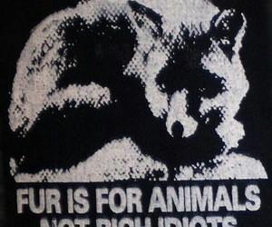 animals, idiots, and bear image