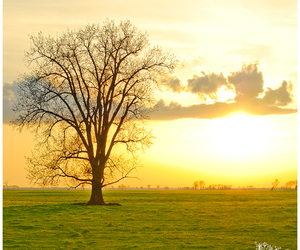 light, sky, and tree image
