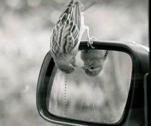 bird, mirror, and car image