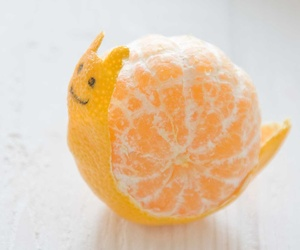 orange, snail, and fruit image