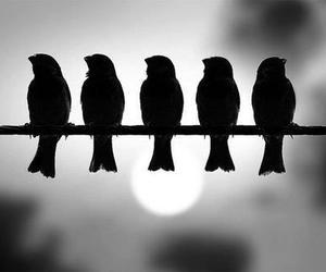 bird, black, and animal image