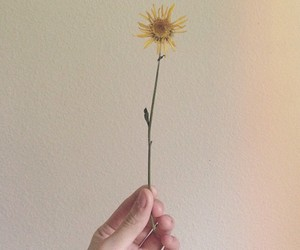 daisy, dried, and flower image