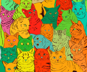 cat, colors, and kitty image