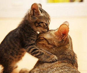 awww, kitty, and cute image