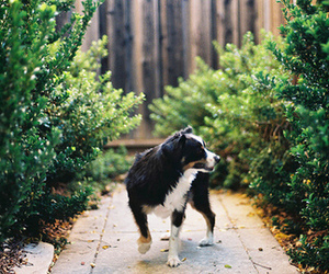 vintage, dog, and nature image