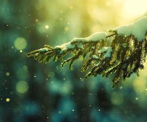beleza, christmas tree, and snow image