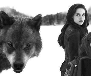 twilight, bella, and wolf image