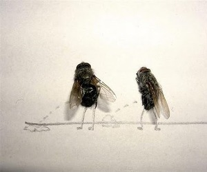 art, fly, and funny image