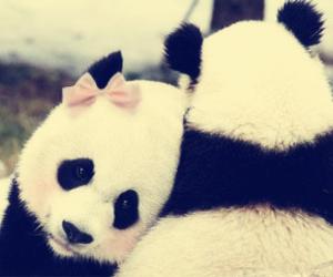 panda, love, and cute image
