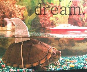 Dream, turtle, and shark image