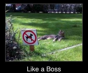 like a boss image