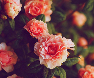 flowers, hipster, and pohotgraphy image