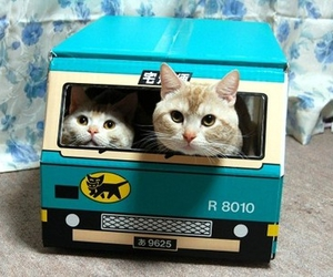 bus, cats, and kittens image