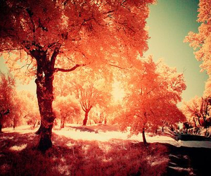 tree, autumn, and nature image