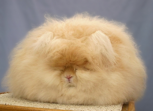 angora, animal, and odd image