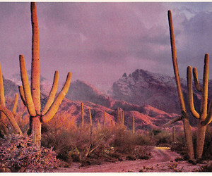 cactus and desert image