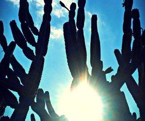 cactus, photography, and sun shine image