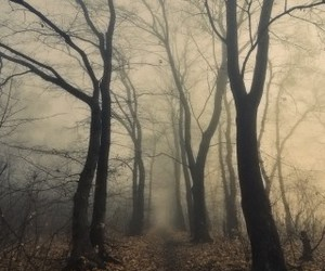 tree, forest, and dark image