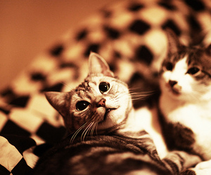 5d, cat, and cats image