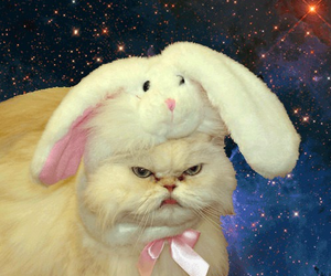 angry cat, cat, and easter image