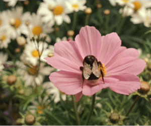flowers, bee, and daisy image