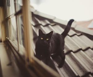 animal, black cat, and bokeh image