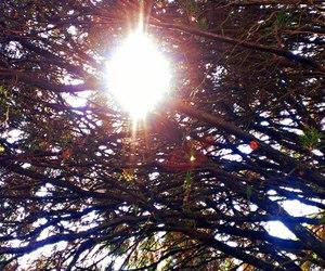 photography, sun shine, and tree image