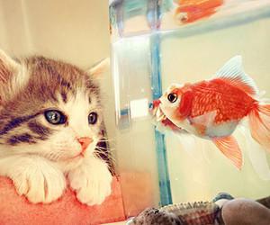 animal, boy, and fish image