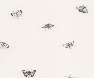 butterfly, drawing, and insects image