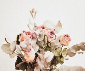 Image by Rare & Beautiful