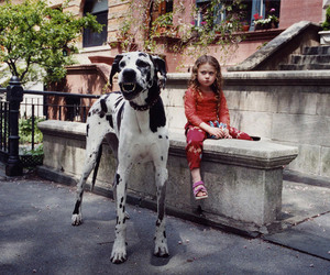 dog, child, and photography image