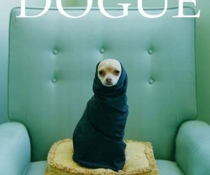 dog, funny, and vogue image