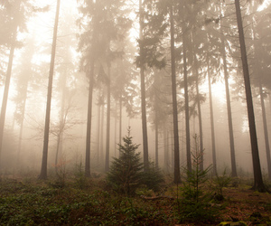 foggy, loneliness, and photography image