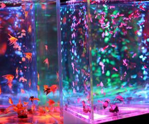 fish, light, and aquarium image