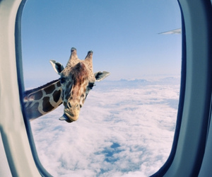 giraffe, animal, and sky image