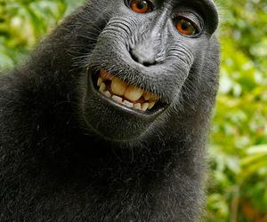 monkey, funny, and smile image