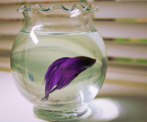 fish, purple, and water image