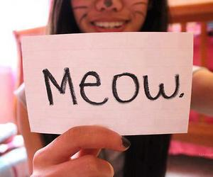 meow, cat, and photography image