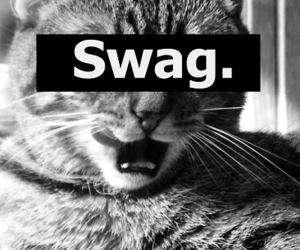 swag and cat image