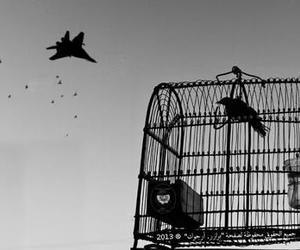 arabic, bird, and black&white image