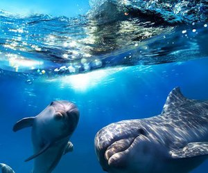 animals best moments ♥♥♥ image