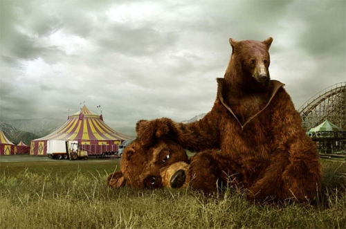 bear and circus image