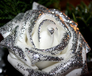 glitter, rose, and sparkly image