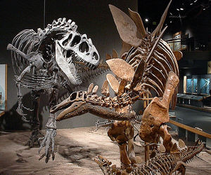 dinosaur, fossils, and history image