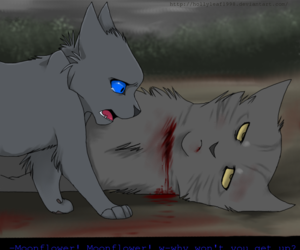 blood, cats, and moonflower image