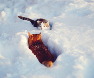 cats, snow, and nature image