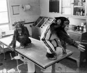 black and white, chimps, and cute image