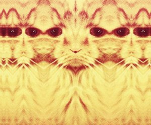 abstract, cat, and glitch image