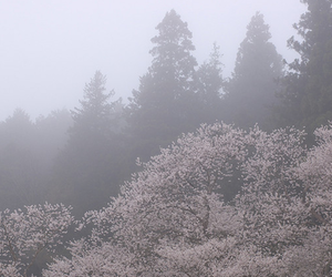 pale, nature, and pastel image