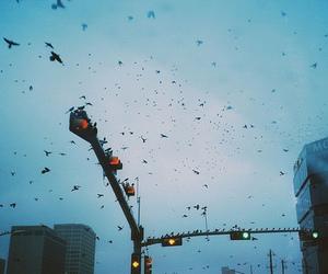 birds, sky, and city image